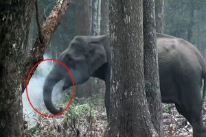 """Smoking elephant"" goes viral on social media"