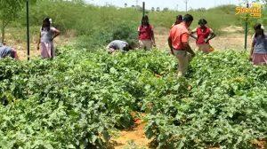 Tirunelveli school agriculture