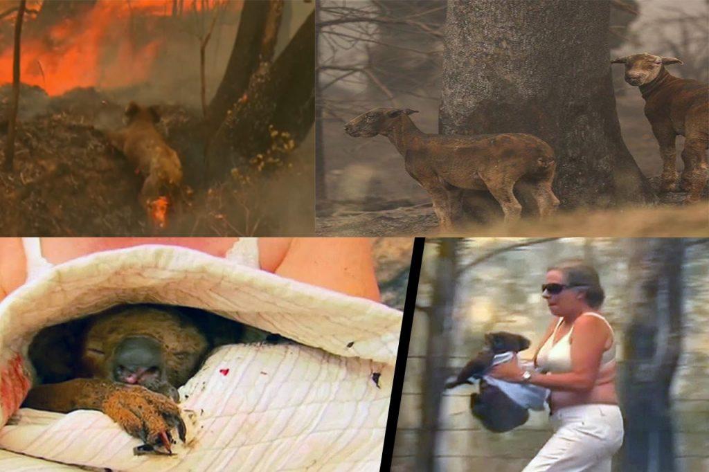 Animals Suffered - Bush Fire